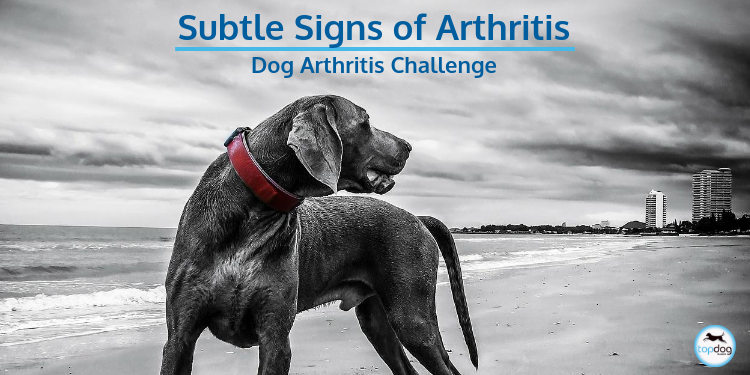 The 12 Subtle Signs of Arthritis in Dogs