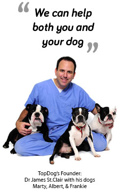 we can help you and your dogs
