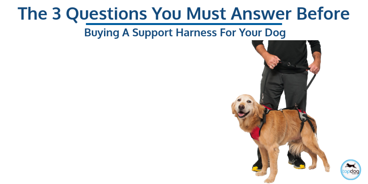 The 3 Questions You Must Answer Before Buying a Support Harness for Your Dog