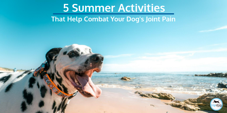 5 Summer Activities That Help Combat Your Dog's Joint Pain