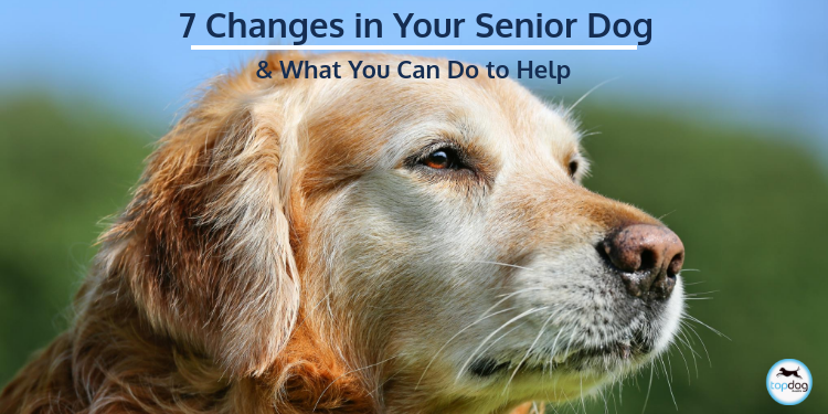 7 Changes in Your Senior Dog and What You Can Do to Help