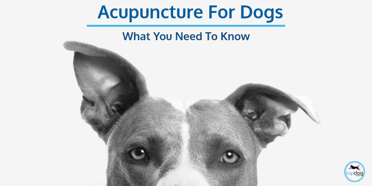 Acupuncture for Dogs: What you need to know