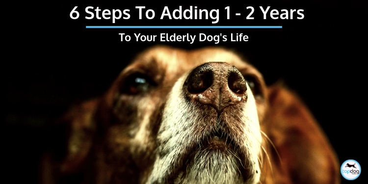 6 Steps to Add 1-2 Years to Your Elderly Dog's Life