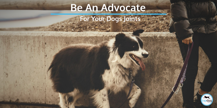 Be an Advocate for Your Dog's Joints