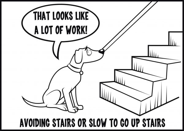 Avoiding stairs is a sign of arthritis in dogs