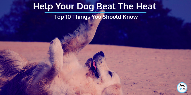 Help Your Dog Beat the Heat: Top 10 Things You Should Know