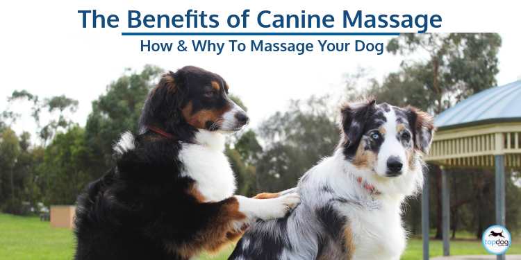 The Benefits of Canine Massage: How and Why to Massage Your Dog