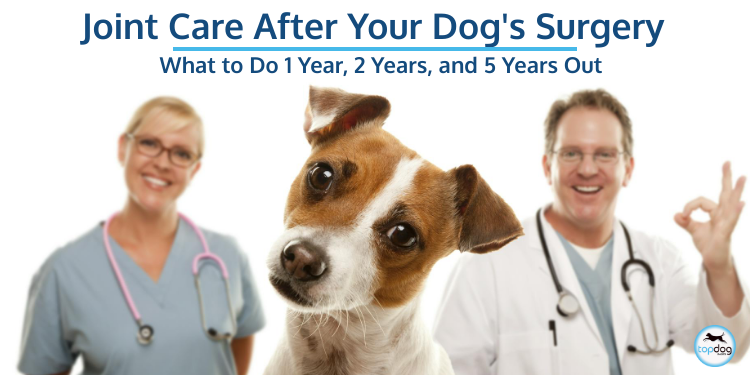 Joint Care After Your Dog's Surgery: What to Do 1 Year, 2 Years, and 5 Years Out