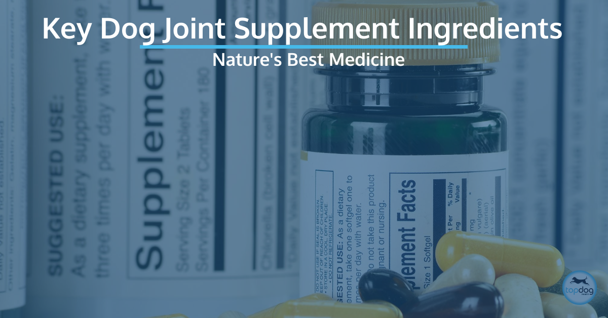 Key Dog Hip and Joint Supplement Ingredients