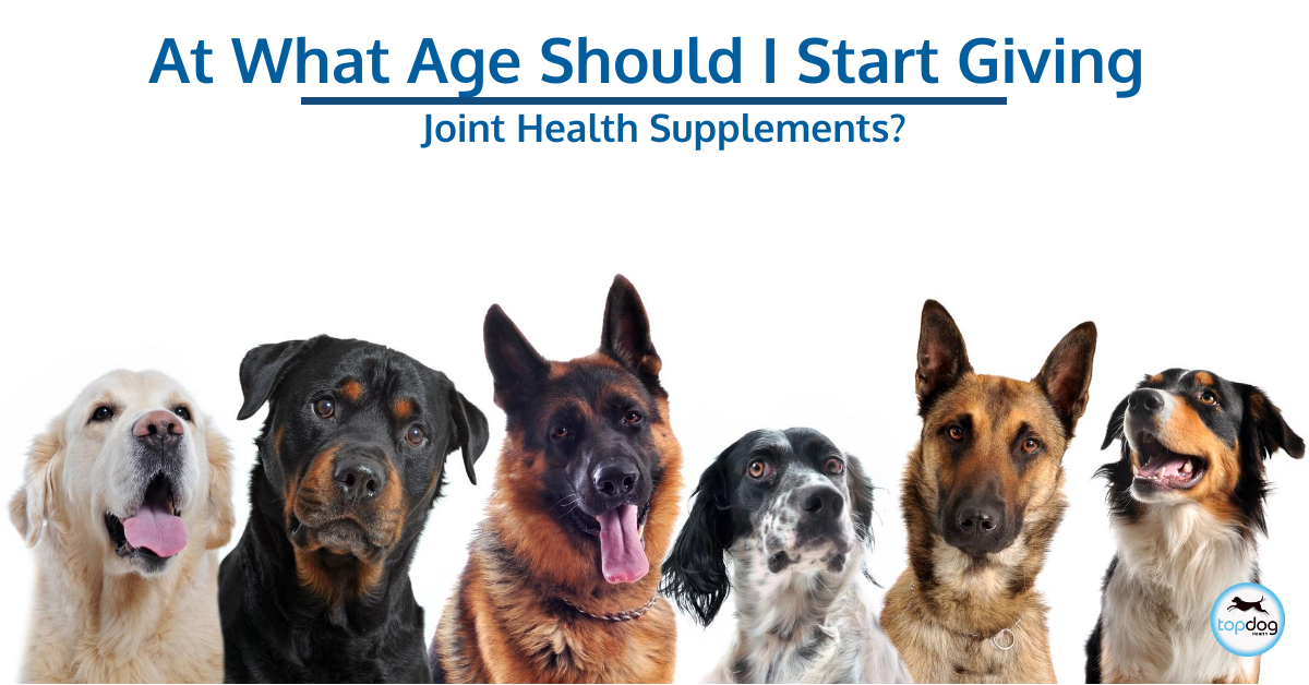 At What Age Should I Start Giving My Dog a Joint Health Supplement?