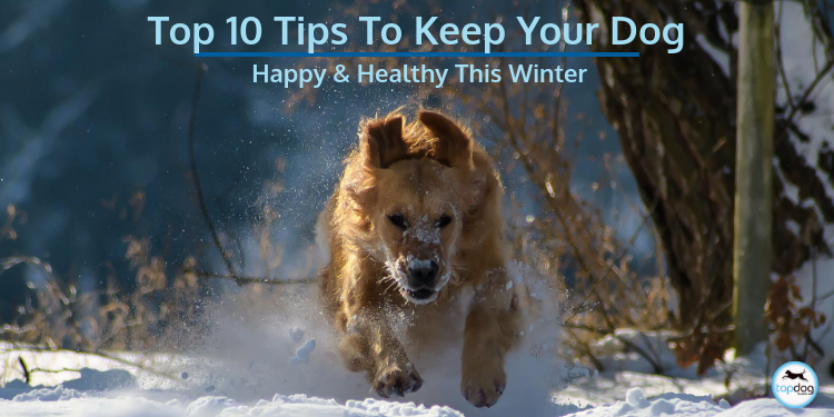 Our Top 10 Tips to Keep Your Dog Happy and Healthy This Winter