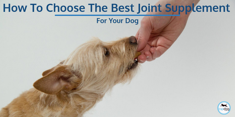 How to Choose the Best Joint Supplement for Your Dog