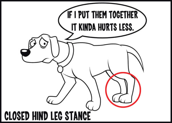 closed hind leg stance is a sign of arthritis in dogs