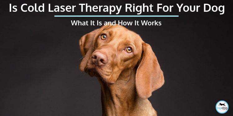 Is Cold Laser Therapy Right for Your Dog?