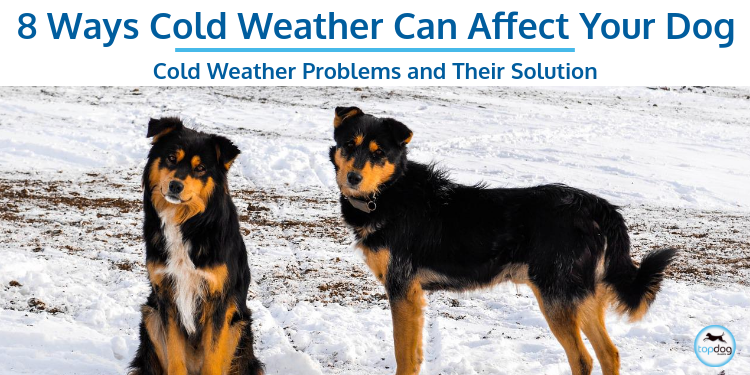 8 Ways Cold Weather Can Affect Your Dog: What to Watch For and How to Help.