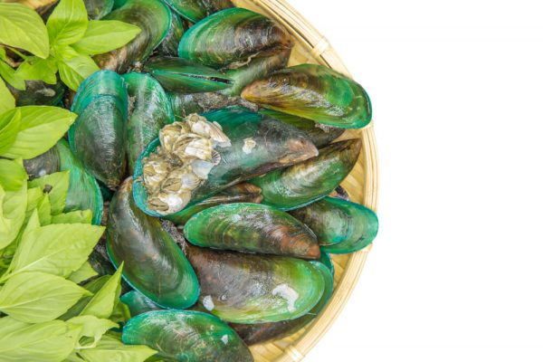 green lipped mussel great for arthritis in dogs
