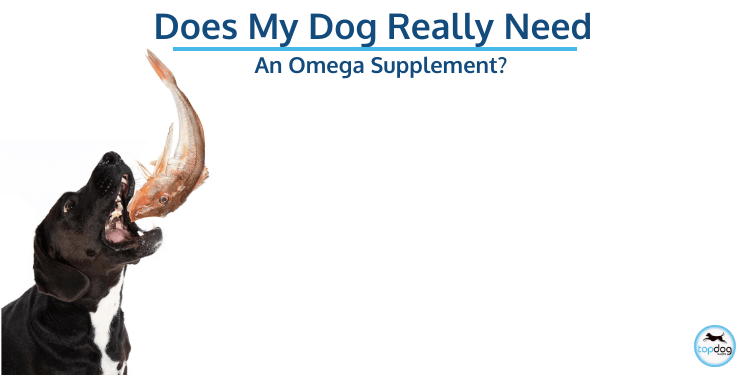 Does My Dog Really Need an Omega Supplement?