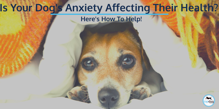 Is Your Dog's Anxiety Affecting Their Health? Here's How to Help