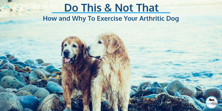 Do This, Not That: Why and How to Exercise Your Arthritic Dog