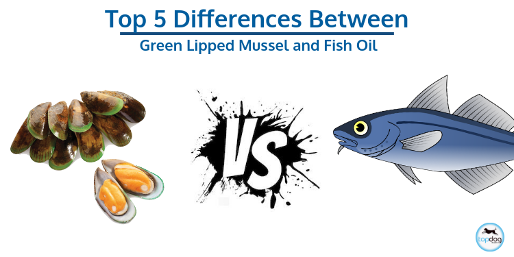 The Top 5 Advantages of the Green Lipped Mussel vs. Fish Oil