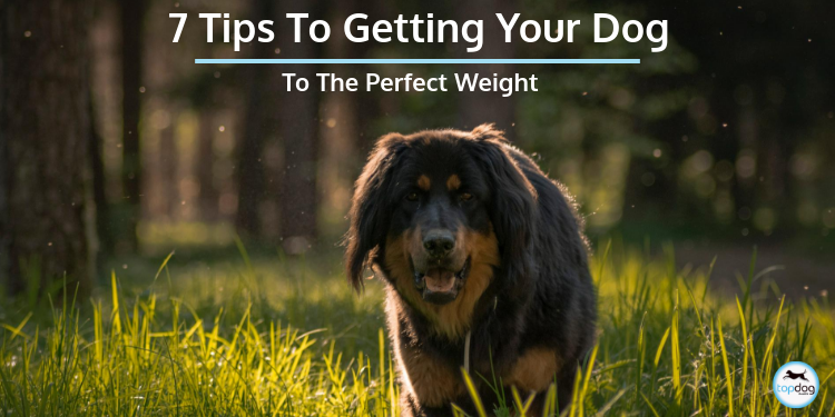 7 Tips to Getting Your Dog to a Perfect Weight