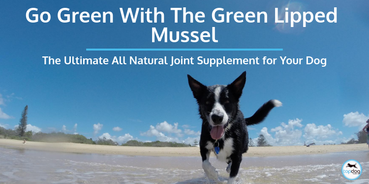 Go Green with the Green Lipped Mussel: The Ultimate All-Natural Joint Supplement for Your Dog