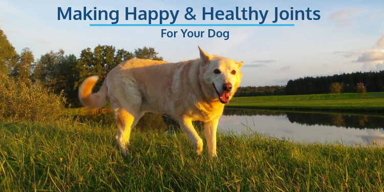 Making Happy and Healthy Joints for your Dogs. Everything from Exercise to Supplements and more!