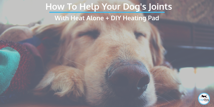 How to Help Your Dog's Joints with Heat Alone + DIY Heating Pad