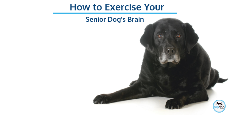 How to Exercise Your Senior Dog's Brain