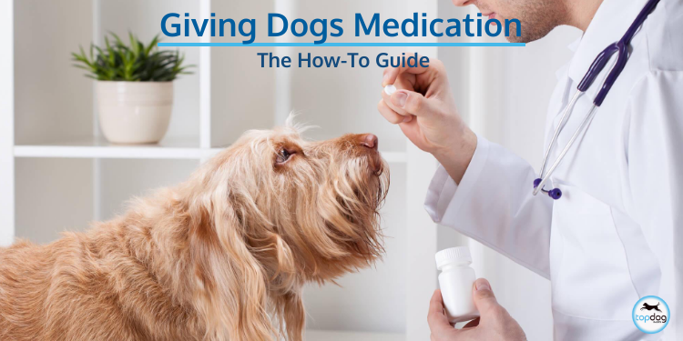 Giving Medications to Your Dog: A How-To Guide