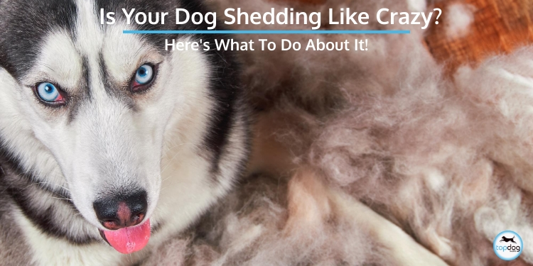 Is Your Dog Shedding Like Crazy? Here's What to Do