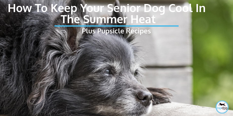 How to Keep Your Senior Dog Cool in the Summer Heat + Pupsicle Recipe