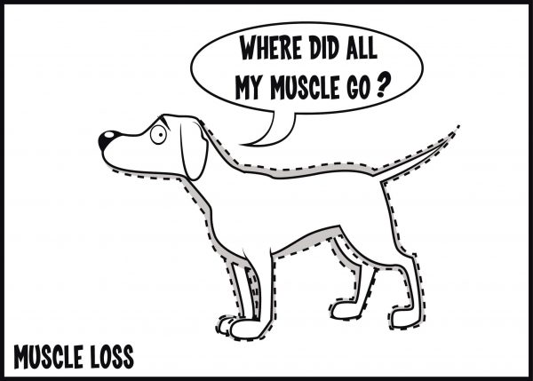 muscle loss is a sign of arthritis in dogs