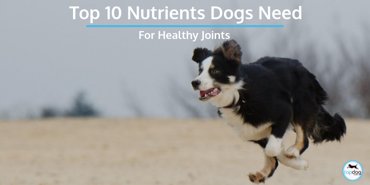 Top 10 Nutrients Dogs Need for Healthy Joints
