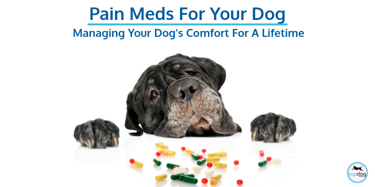 Insider Tips: Pain Management for Your Dog