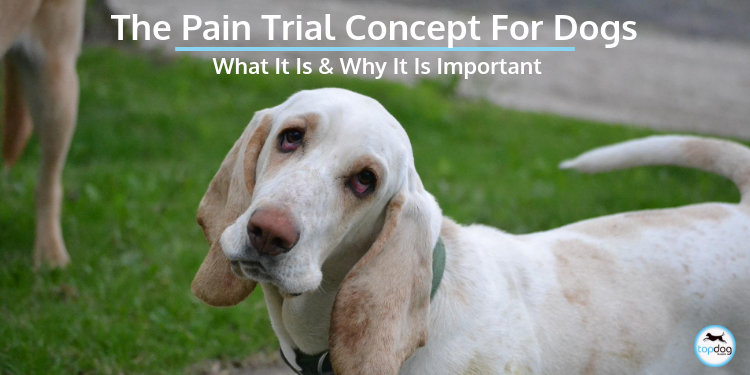 The Pain Trial Concept for Dogs. What is it and Why is it important?