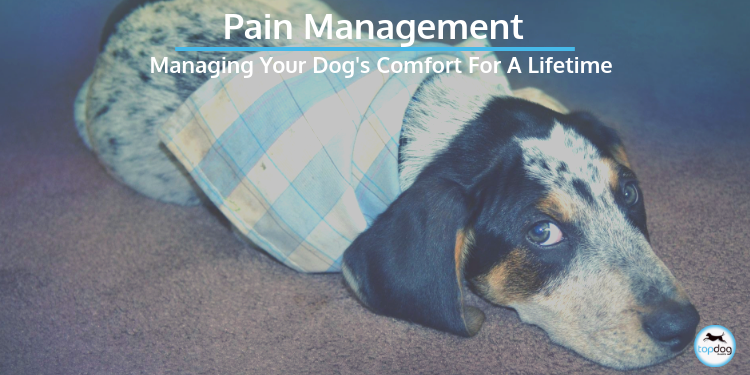 Pain Meds for Dogs and Managing Your Dog's Comfort for a Lifetime