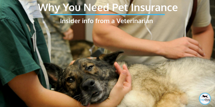 Why You Need Pet Insurance: Insider Info from a Veterinarian