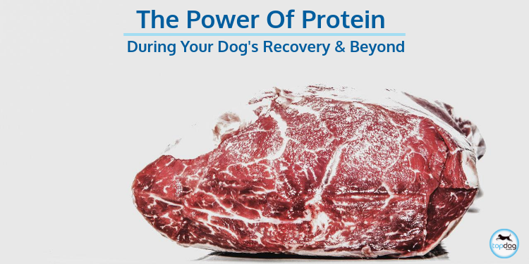 The Power of Protein during your Dog's Recovery and Beyond