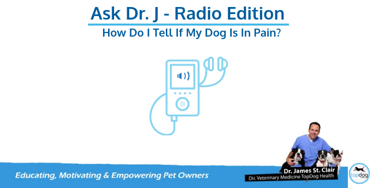 Recent Radio Show Interview: Getting Your TopDog in Top Shape After Joint Surgery