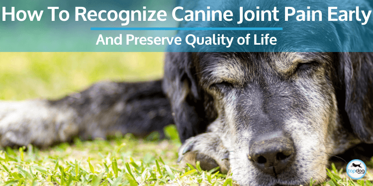 How to Recognize Canine Joint Pain