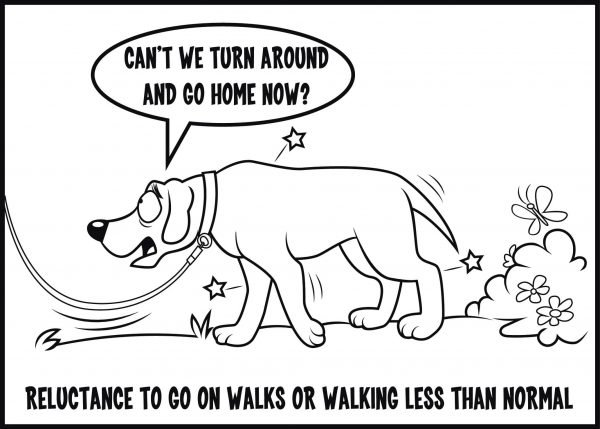 avoiding walks is a sign of arthritis in dogs