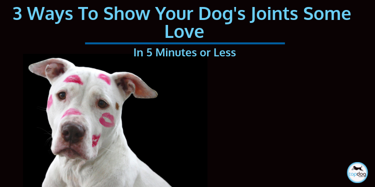 3 Ways to Show Your Dog's Joints Some Love in 5 Minutes or Less
