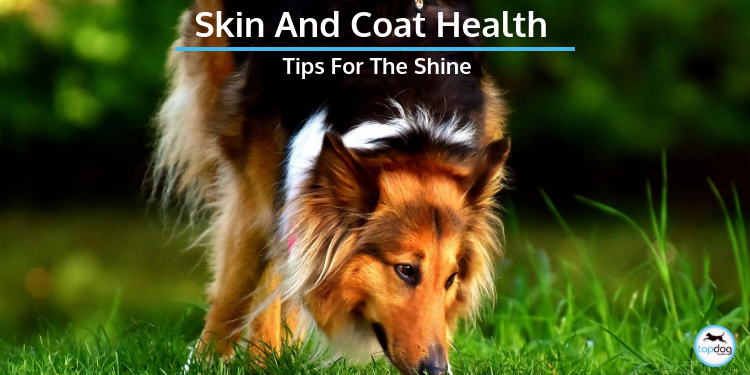 Skin and Coat Health: Tips for the Shine