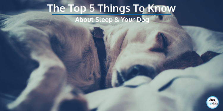 The Top 5 Things to Know About Sleep and Your Dog