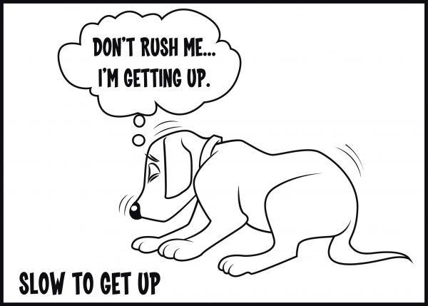 slow to get up or down is a sign of arthritis in dogs