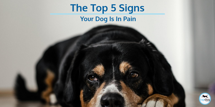 The Top 5 Signs Your Dog Is in Pain