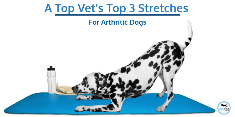 A Top Vet's Top 3 Stretches for Arthritic Dogs