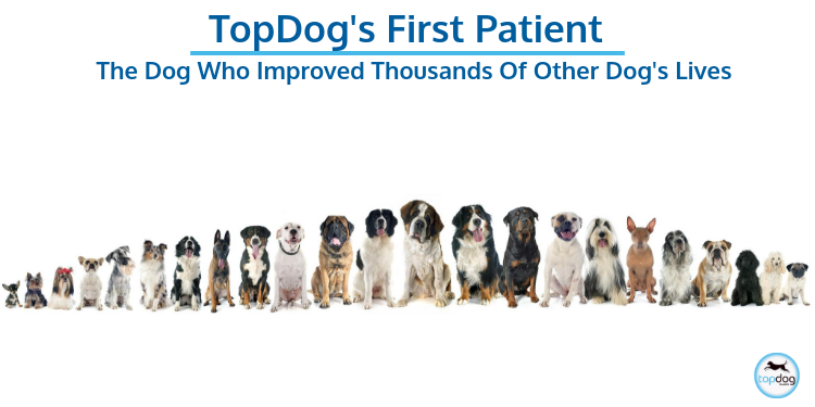 TopDog's First Patient: The Dog Who Improved Thousands of Other Dog's Lives