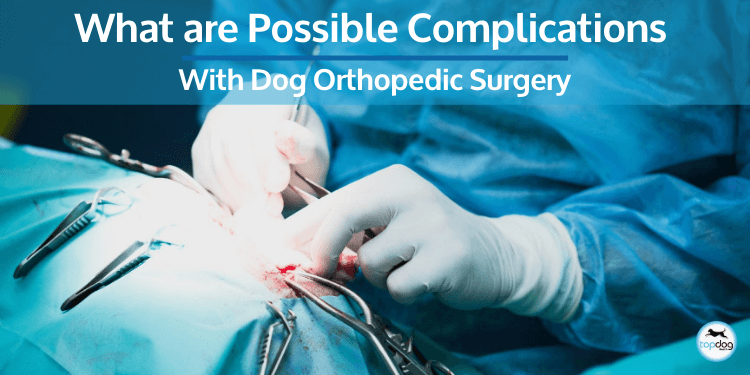 What are Possible Complications with Dog Orthopedic Surgery?